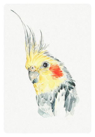 Stefan Gevers - Cockatiel - greeting card