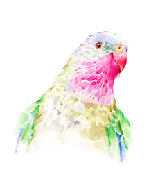 Stefan Gevers - Princess parrot - edition print