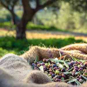 Australian sourced ingredients at Byron Bay Olive Co.
