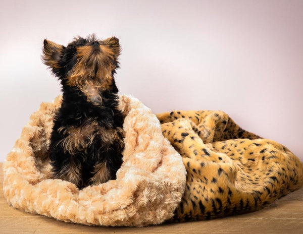 Soft Cosy Cuddle in Leopard - Susan Lanci Designs