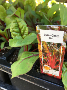 Swiss Chard - Cell Pack