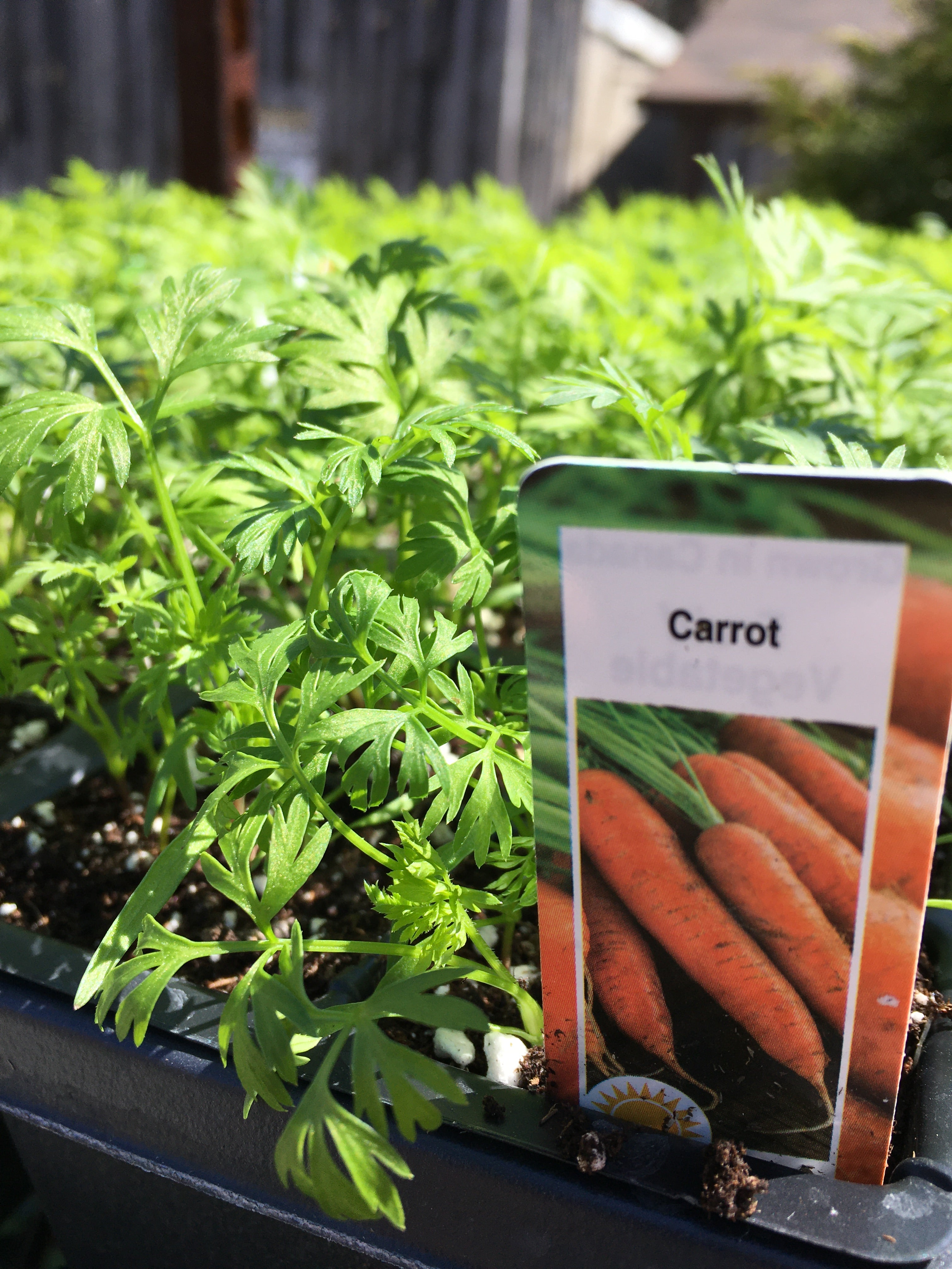Carrots - Cell Pack