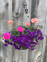 Load image into Gallery viewer, Mixed Geranium Hanging Basket (Assorted Colours)