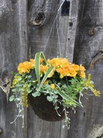 Load image into Gallery viewer, Mixed Begonia Hanging Basket (Assorted Colours)