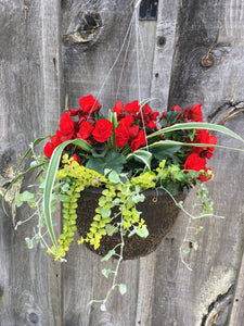 Mixed Begonia Hanging Basket (Assorted Colours)