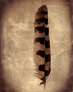 Feather (Owl)