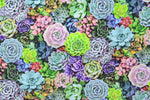 Load image into Gallery viewer, Succulent Garden II
