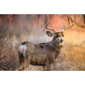 Wise Muley