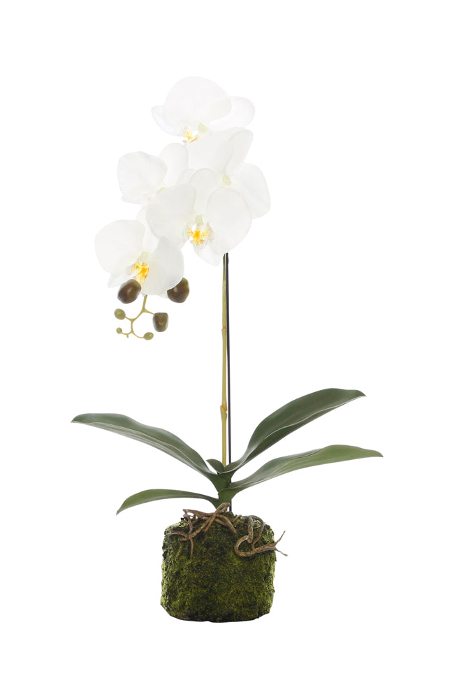 Tiffany White Orchid - Single