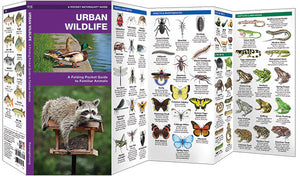 Pocket Naturalist: Urban Wildlife