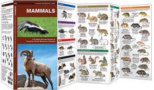 Load image into Gallery viewer, Pocket Naturalist: Mammals