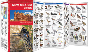 Pocket Naturalist: New Mexico Birds