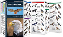 Load image into Gallery viewer, Pocket Naturalist: Birds of Prey