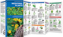 Load image into Gallery viewer, Pocket Naturalist: Medicinal Plants