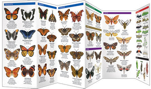 Pocket Naturalist: Southwestern Butterflies & Moths