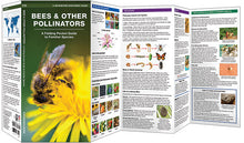Load image into Gallery viewer, Pocket Naturalist: Bees & Other Polinators