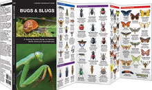 Load image into Gallery viewer, Pocket Naturalist: Bugs & Slugs