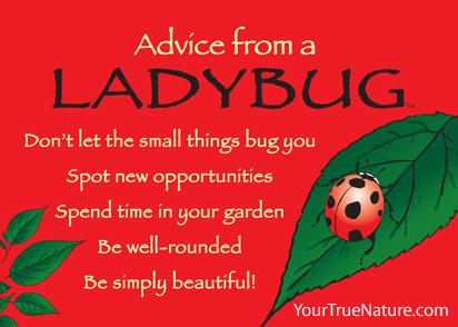 Magnet: Advice From Lady Bug