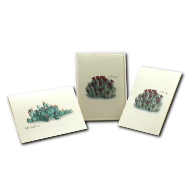 Boxed Notecards: Cacti Assortment II