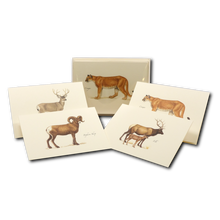 Load image into Gallery viewer, Boxed Notecards: Western Mammals