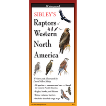Load image into Gallery viewer, Pocket Guide: Sibley's Raptors of Western North America
