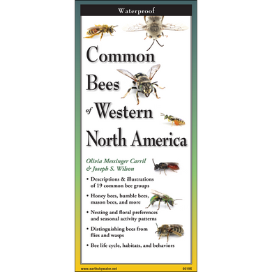 Pocket Guide: Common Bees of Western North America