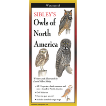 Load image into Gallery viewer, Pocket Guide: Sibley's Owls of North America
