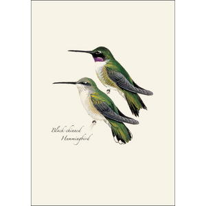 Boxed Notecards: Peterson Hummingbirds