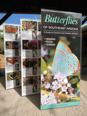 Pocket Guide: Butterflies of Southeast Arizona