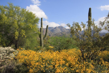Load image into Gallery viewer, Puzzle: Sabino Canyon 500 pieces