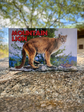 Flipbook: Mountain Lion