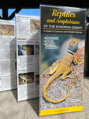 Pocket Guide: Reptiles & Amphibians of the Sonoran Desert