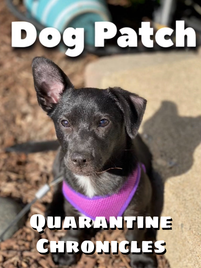Dog Patch Quarantine Chronicles