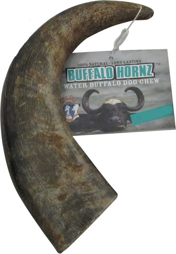 Large Water Buffalo Horns