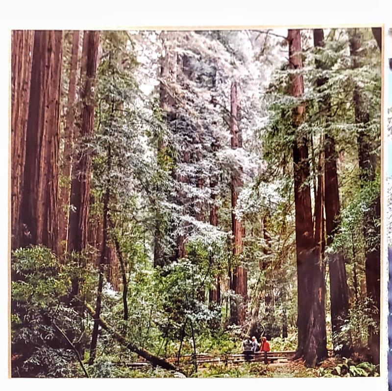 Framed Photo - Muir Woods - Tiny People in Big Places by Michaela Rose