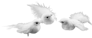 White Dove Bird assortment
