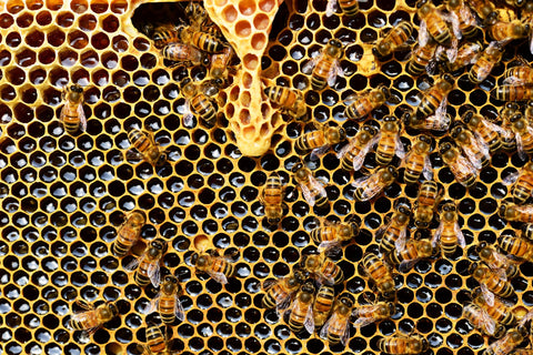 What is Royal Honey