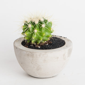 CEMENT POT WITH CACTUS