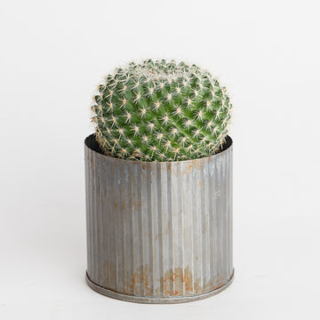 TIN POT WITH CACTUS