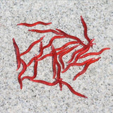 50 pcs Soft Red Earth Worms