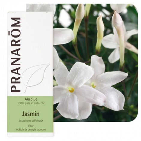 Pranarom jasmin (Jasminum sp.) apsolut 5 mL