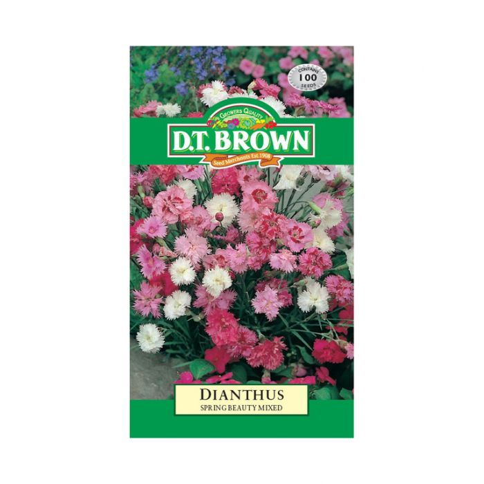 Buy DT Brown Dianthus Spring Beauty Seeds | Dollars and Sense