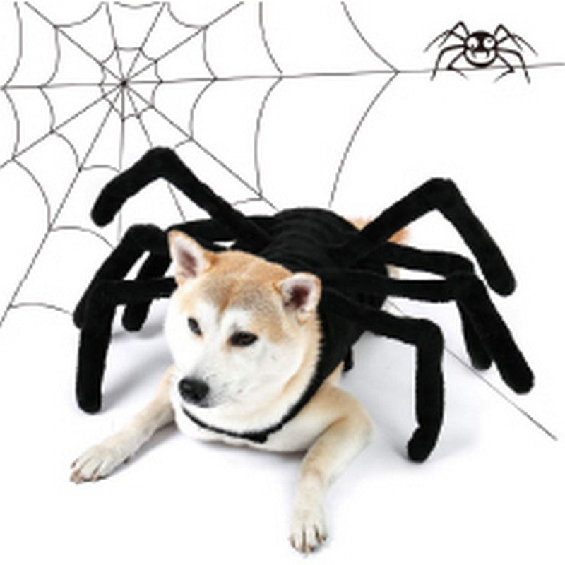 Halloween Spider Pet Costume| Dollars and Sense