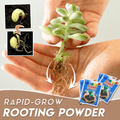 Rapid Root Growth