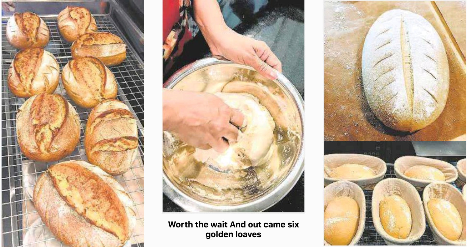 The 'Knead' to Bake images