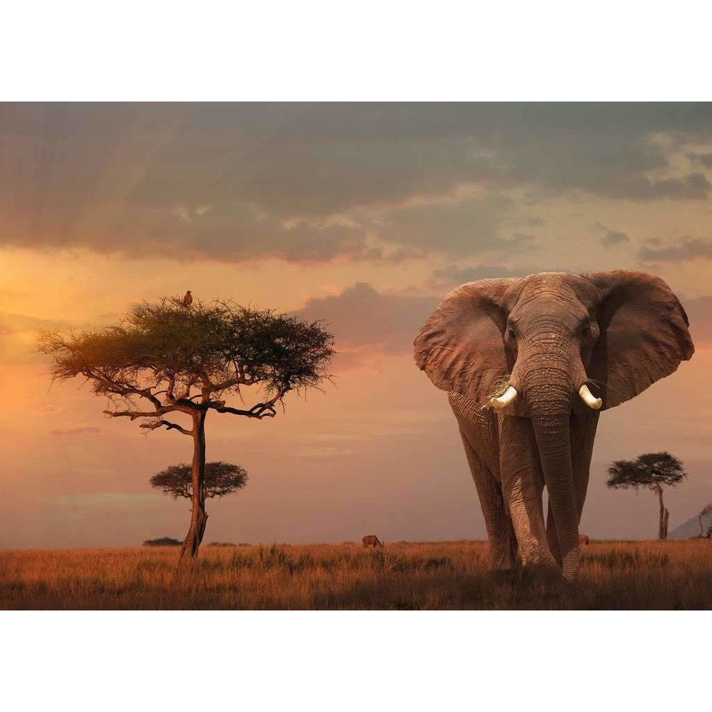 Elefant in Masai Mara Nationalpark | Puzzle | 1000 Teile