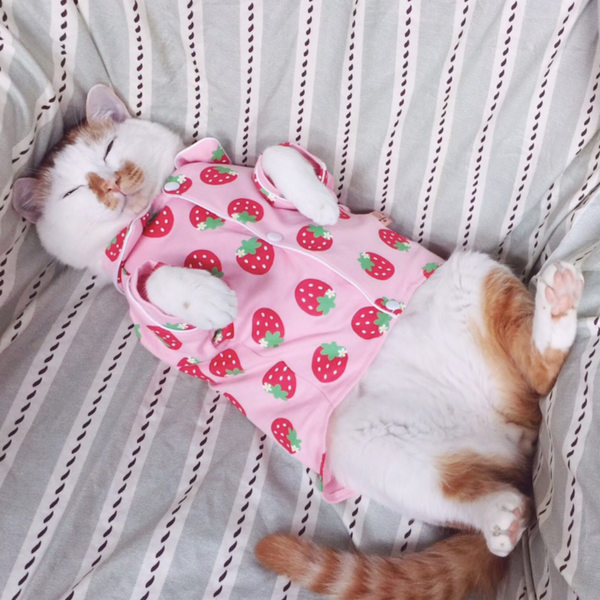 Chicks, strawberries or both? Choose a relaxed outfit for your furry friend. We guarantee it will look amazing on your insta photos.