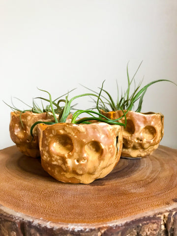 Pastel Skull Planter- Kettle Corn