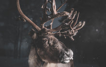 Load image into Gallery viewer, The reindeer