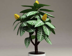 Money Tree Aphelandra Squarrosa Lily 350 Pcs Flowers Seeds